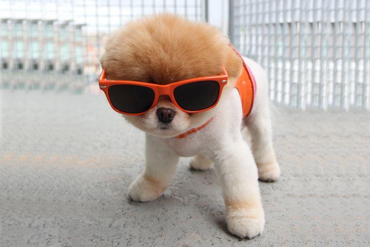 狗狗患上眼睛结膜炎怎么办?