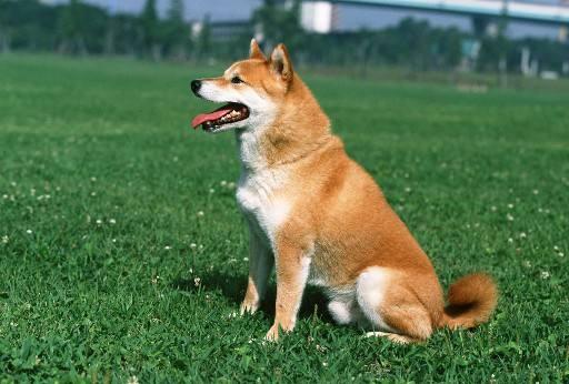 狗狗最讨厌人类的11种行为?