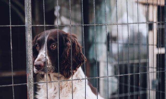 狗狗在笼子里养的十点好处