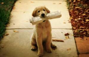 10件伤害狗狗 5件对狗狗有益的事情?