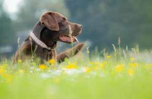 狗狗临终前的奇怪表现你知道吗?