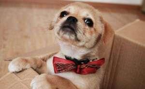 狗能用鼻子嗅出主人的情绪吗?