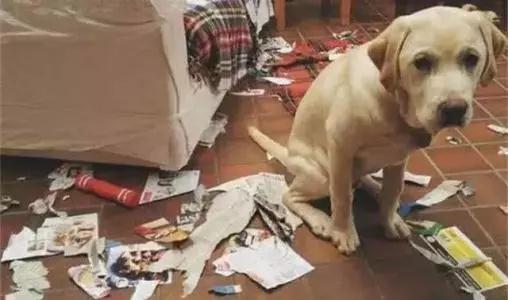 狗狗被宠坏有哪些表现?