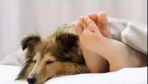 狗狗和人一起睡觉需要注意什么问题?