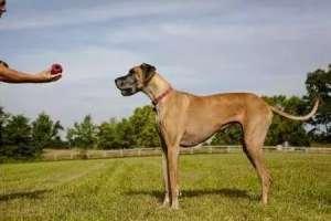 训练狗狗,这5个不正确,千万别犯?