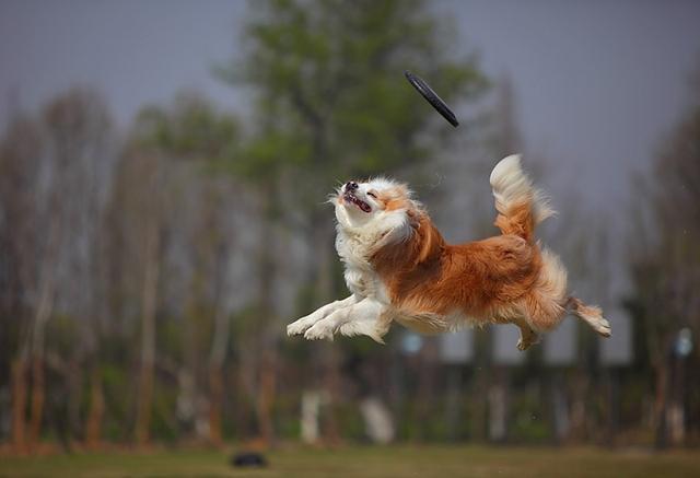 训练狗狗,这5个不正确,千万别犯