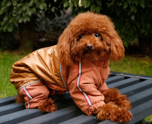 给狗狗穿冬装的注意事项?