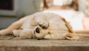 怎么预防和治疗狗狗的螨虫?
