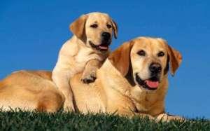 不能纵容狗狗的这几种行为?