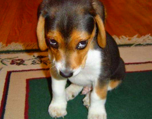 如何训练狗狗惟主是从、只认主人呢?