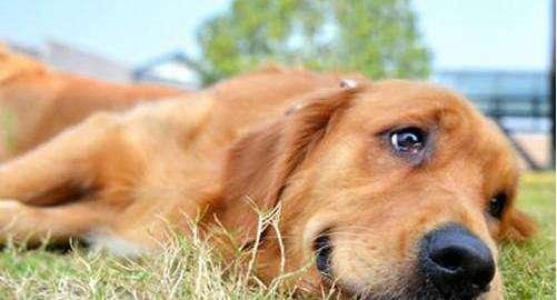 狗狗中毒的一般治疗方法