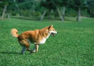 如何让狗狗开心而安全地奔跑?