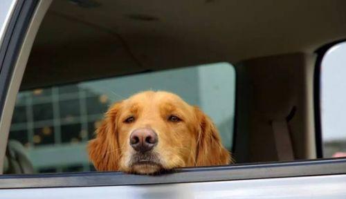 狗狗晕车怎么办?如何训练狗狗坐车