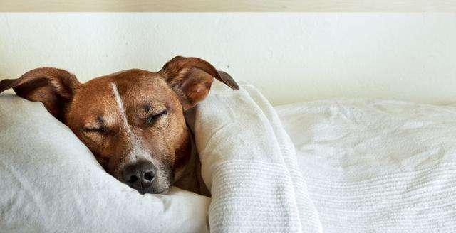狗狗最容易患上哪些传染病?