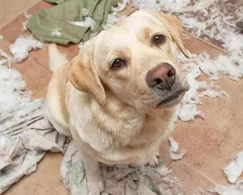 狗狗叹气是什么原因?