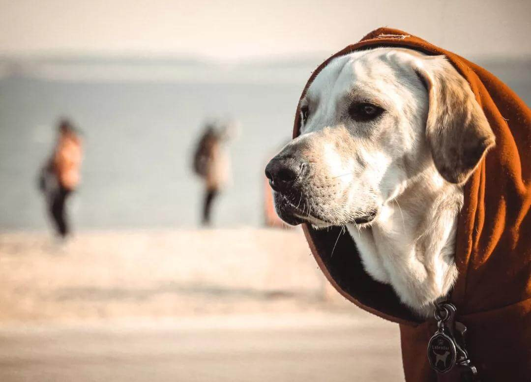 宠物也会有抑郁症吗,宠物抑郁症有哪些表现?