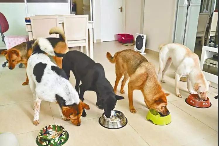 狗狗用餐顺序的训练方法!