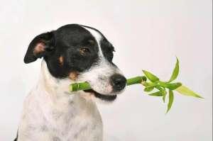 家有宠物,这些植物不能养!