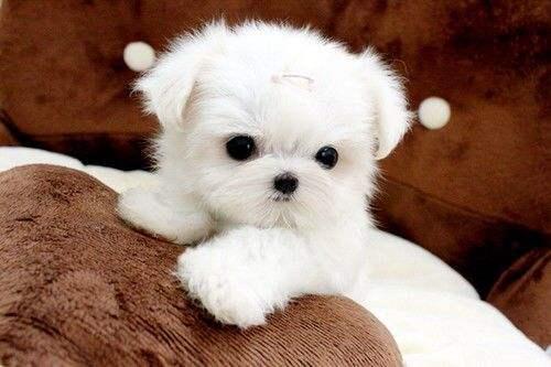 【买狗注意事项】鉴别好狗的8个特征