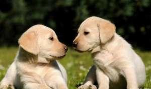 幼犬一般多大可以带出门?
