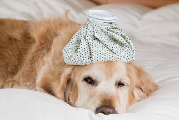 狗狗中毒的简单治疗方法