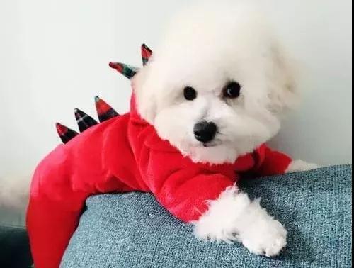 哪些狗狗冬天特别怕冷?
