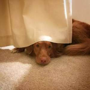 狗狗的求助信号,你看懂了吗?