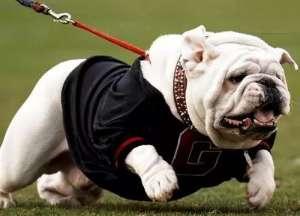 这几种狗狗容易过胖,主人可要多注意!