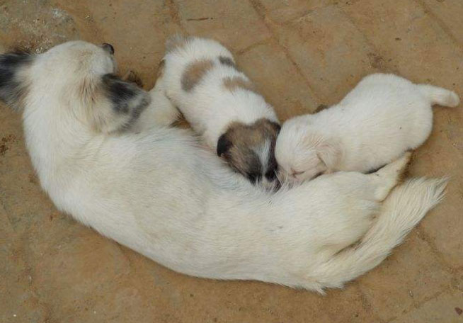 幼犬在什么时候断奶比较好?