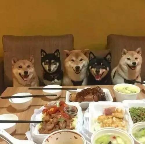 狗狗叹气是什么原因呢?