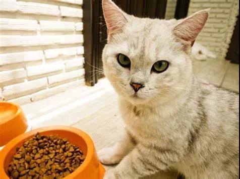狗狗和猫咪在饮食上有哪些不同?