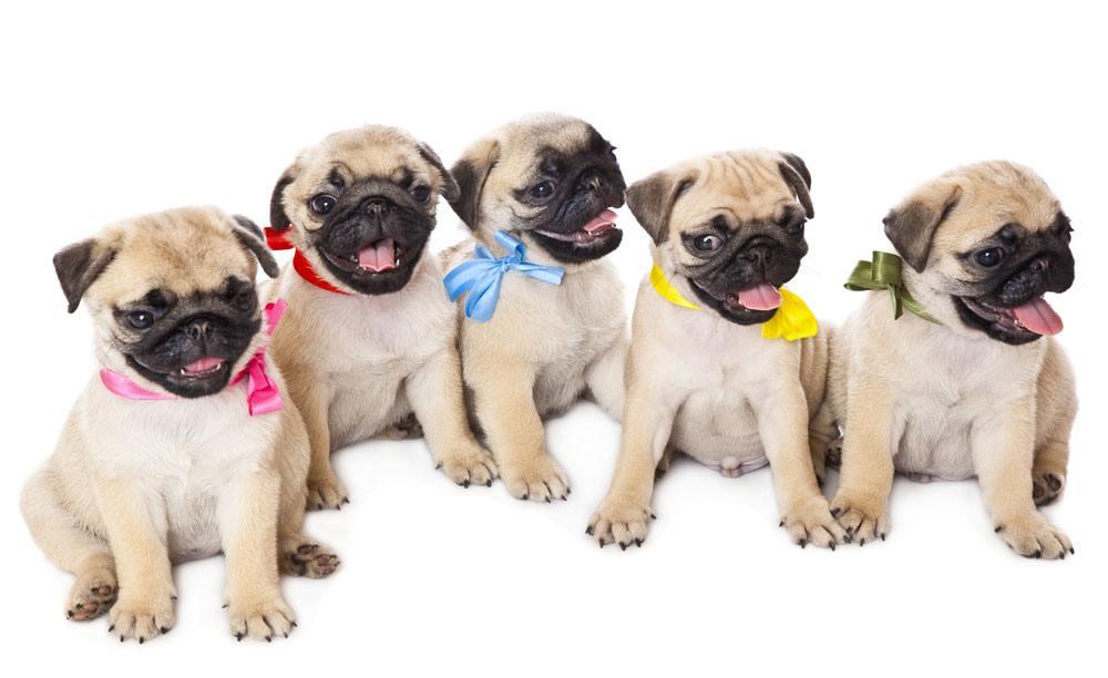 挑选聪明易训狗狗的四个关键点!