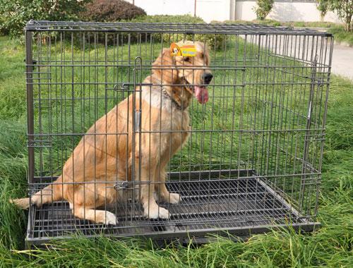 挑选宠物狗笼子的三大技巧