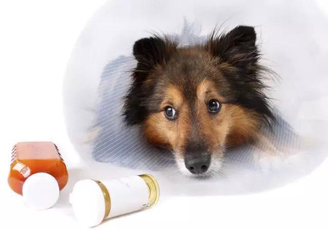狗狗误食樟脑丸会中毒吗?