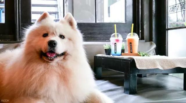 多少咖啡才会让狗狗中毒?