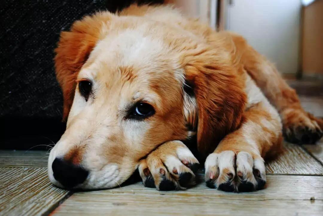 犬尿道感染的诊断和治疗