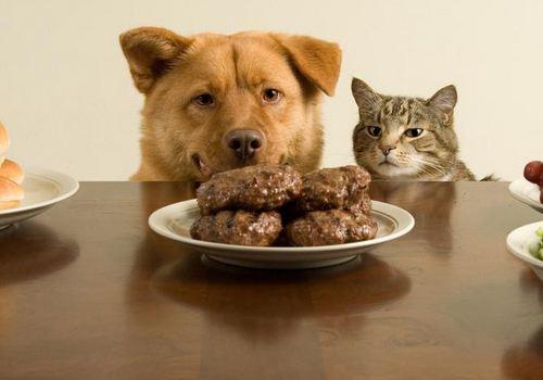 这15种食物不要给狗狗吃?