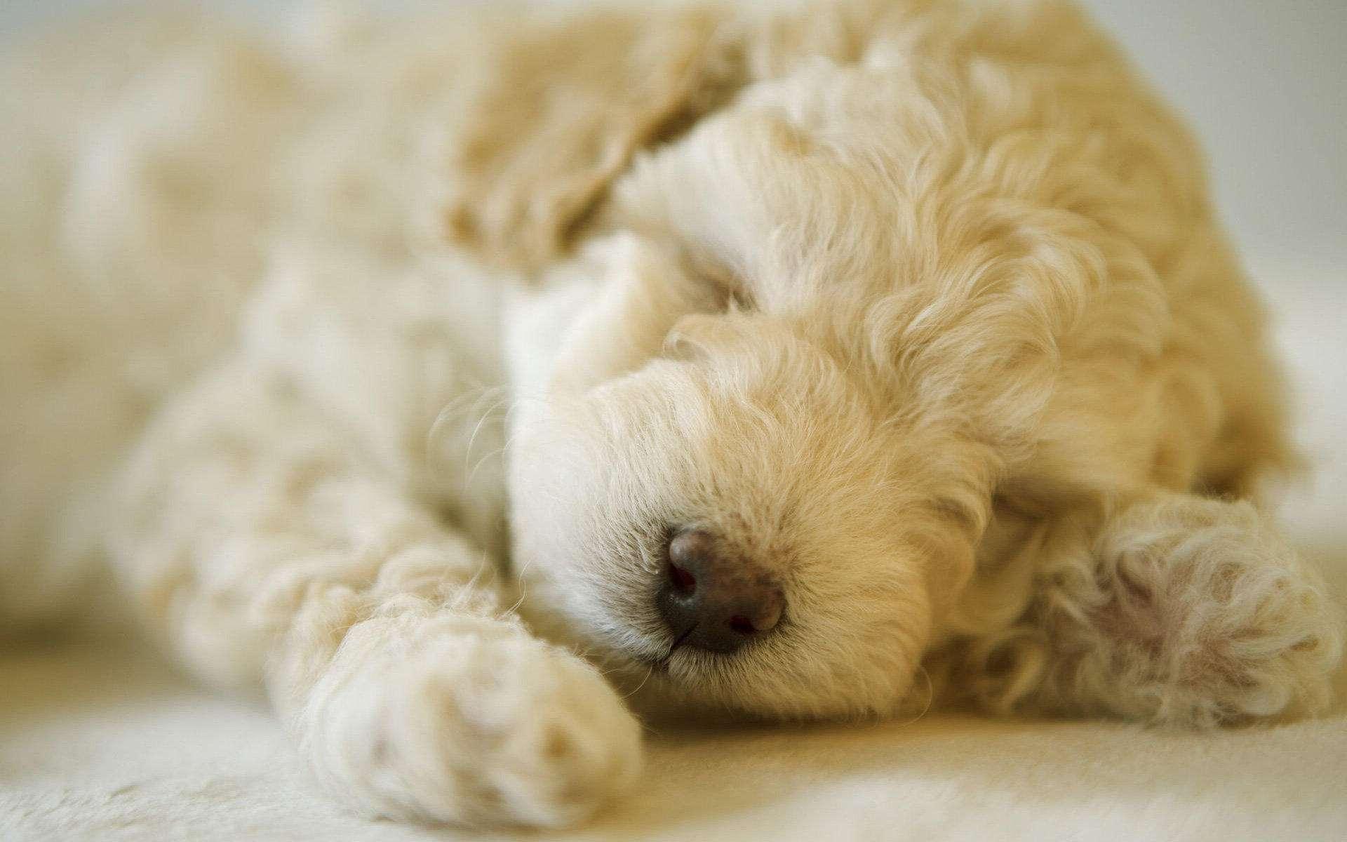 想让狗狗更长命,这8个误区需要注意!