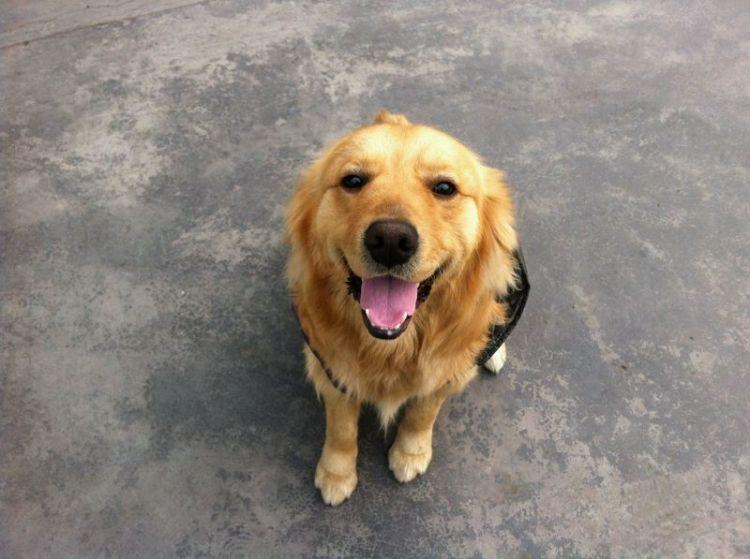 狗狗呼吸急促的3种原因你知道吗?