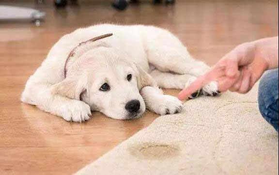 如何训练狗狗尿尿呢?