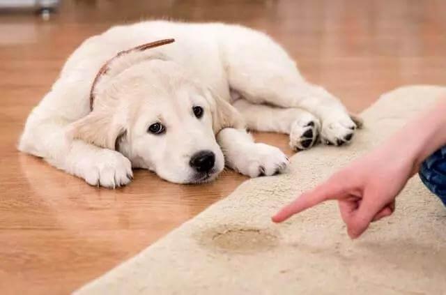 教导狗狗定点大小便总失败?常见的7个原因。