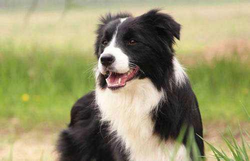 如何训练狗狗送东西和乖乖入座?