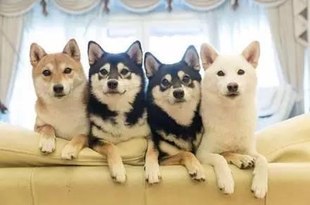 养狗前必须明确的5件事,你考虑好了没有?