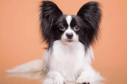 什么狗适合老人养呢?