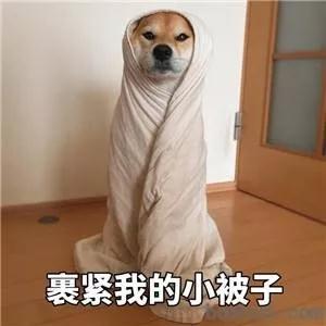 担心亚博足球app官网怕冷,该减少遛狗时间吗?