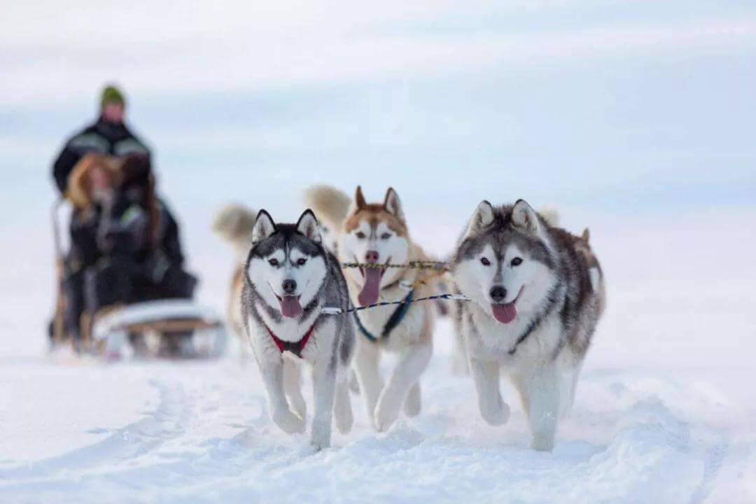 担心狗狗怕冷,该减少遛狗时间吗?