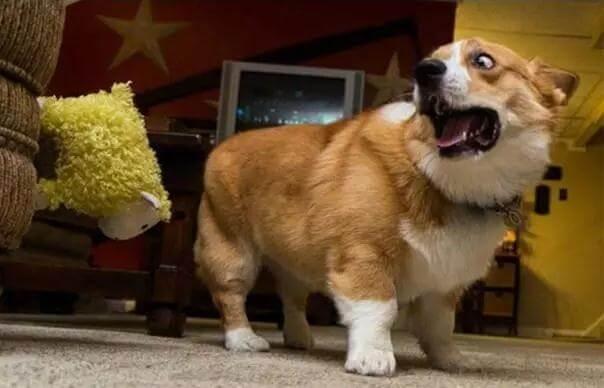 狗狗最不喜欢做的8件事,你都做过吗?