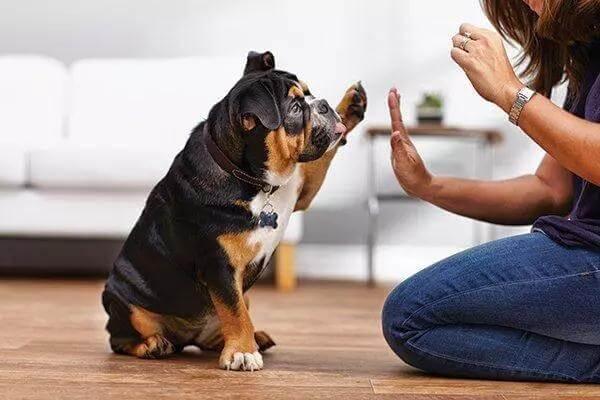 训练狗狗应该选择怎样的训练方式?如何才能得到好结果?
