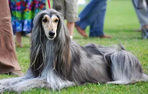 怎样预防狗狗消化不良?