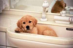 什么是犬的肺炎?狗狗肺炎的治疗方法是什么?